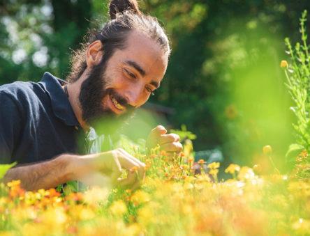 Volunteer in the garden