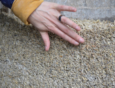 Hempcrete that has just finished drying