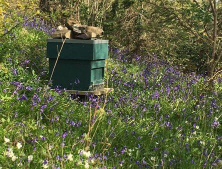 Beehive in spring flowers